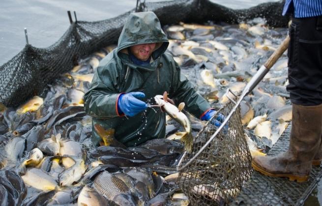 Рыбы на Арале стали ловить больше в 17 раз