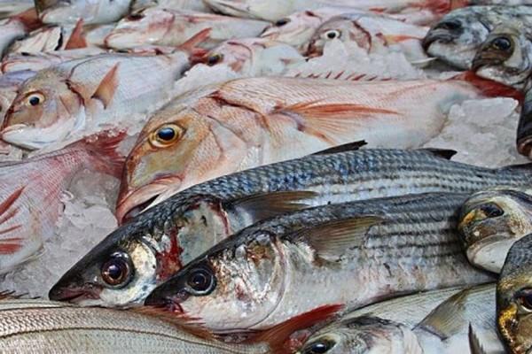 Производители рыбной продукции просят перенести внедрение электронного ветеринарного учета