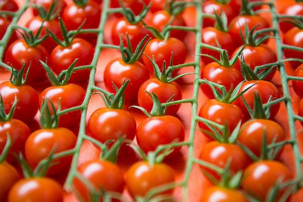 Минсельхоз предложил рассмотреть вариант возобновления поставок томатов из Турции в межсезонье