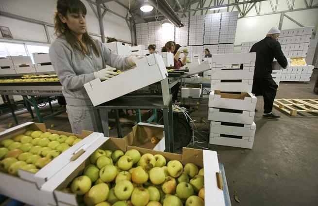 В России запретят продажу санкционных продуктов