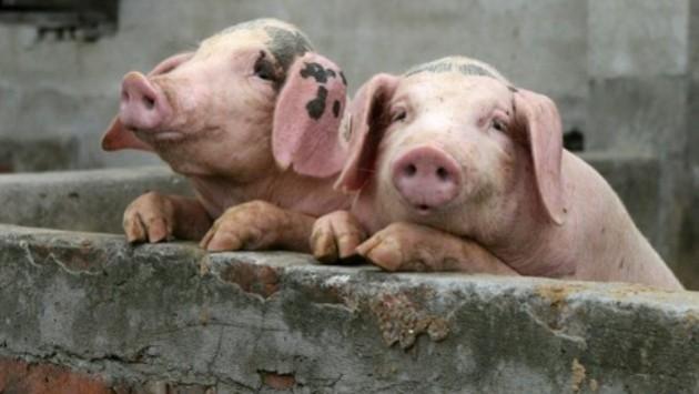 Свинина подорожала после майских праздников