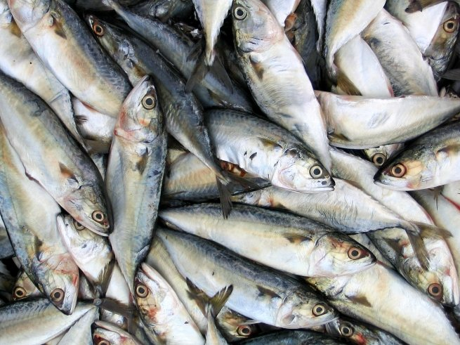 Доставка рыбы с Дальнего Востока подорожала в 1,6 раза