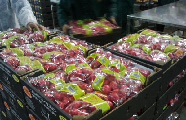 Россия рассмотрит возможность возобновления поставок сельхозпродукции из Албании