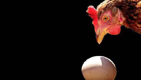ФАС начала внеплановую проверку производителей куриного мяса