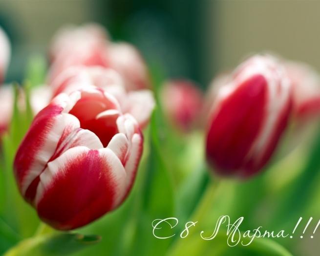 На рынках Москвы стоимость цветов 8 марта выросла на 30%