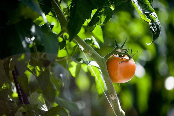 «Русагро» будет выращивать овощи в теплицах
