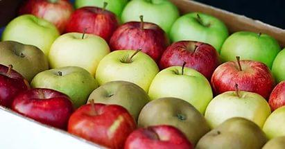 Уничтожены партии санкционных яблок из Турции и Польши