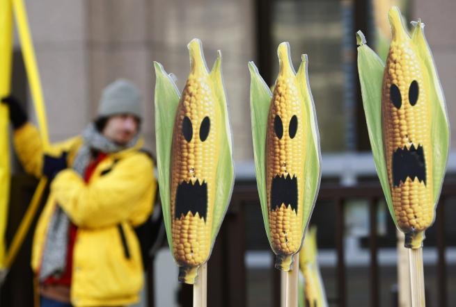 Распространение ГМО могут приравнять к терроризму