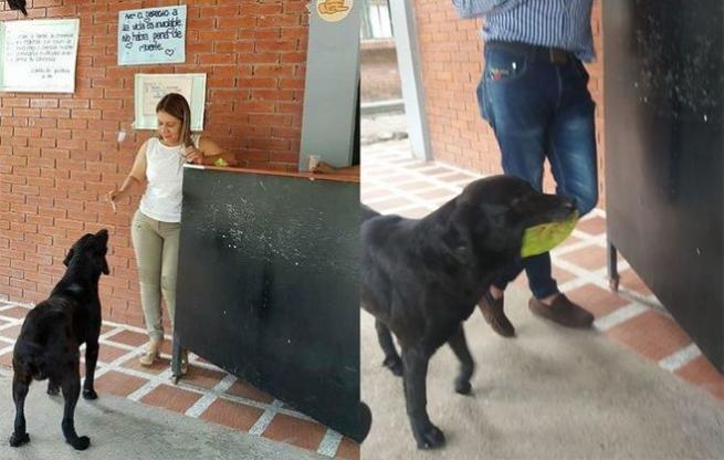 Пес из Колумбии научился покупать еду за «деньги» из листьев