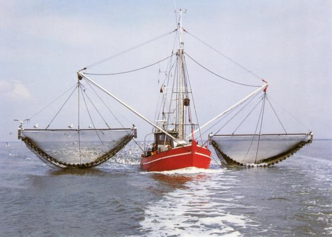 ФАС проводит проверку рыбодобытчиков