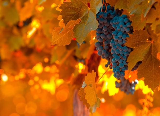 Россия стала крупнейшим потребителем грузинских вин