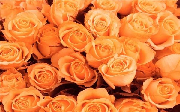 К 8 марта продажи цветов в Москве выросли в 5 раз
