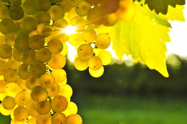 В России может появиться госкорпорация по выпуску виноматериалов
