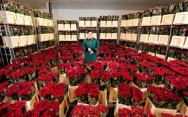 К праздникам цветы в России подорожают до 40%