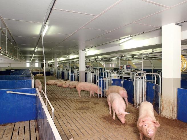 РФ возобновит поставки с еще одного белорусского мясокомбината