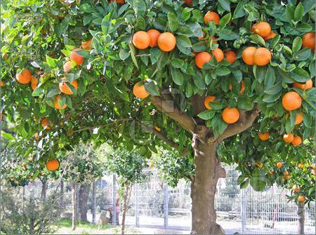 В США рекордно упали продажи апельсинового сока