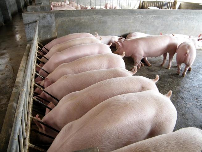 Россия возобновила поставки свинины из Украины