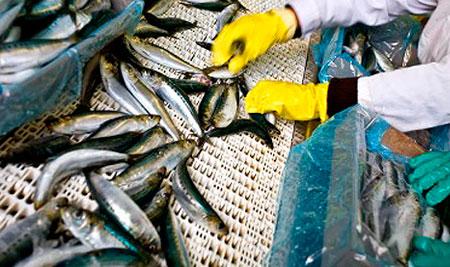 В Москве пройдет первый всероссийский рыбный фестиваль