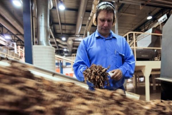 Треть черного рынка табака в России составляют бренды официальных фабрик