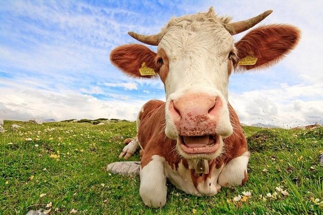 Россия приостановила импорт молочной продукции из Украины
