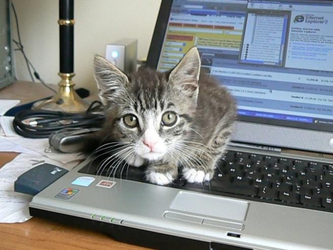 Дорогие ноутбуки Dell воняют кошачьей мочой