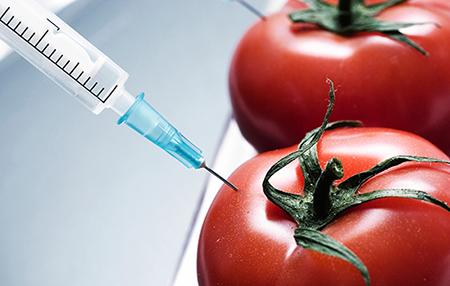 Комиссия правительства РФ одобрила запрет продуктов с ГМО