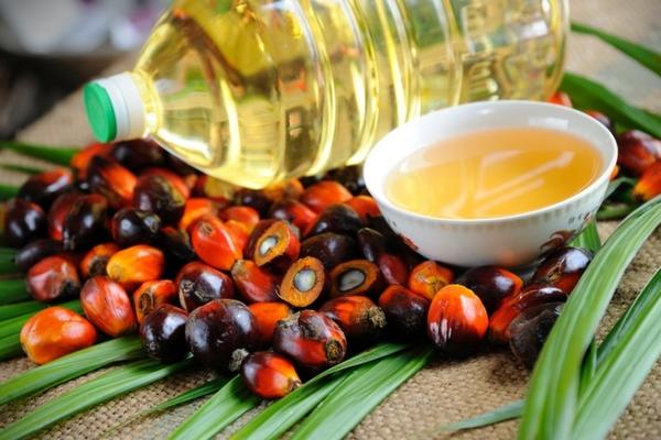 Россия увеличила объем закупок пальмового масла на 35,8%