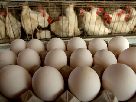 Украина не пропускает яйца из Турции в Россию