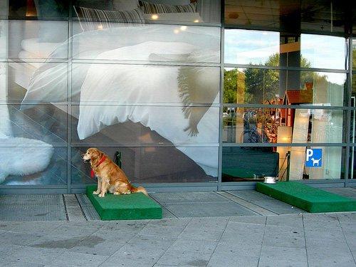 У крупных торговых центров Москвы построят парковки для собак