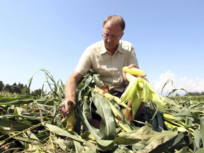 В России обяжут маркировать продукцию с использованием ГМО-кормов