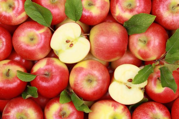 Россельхознадзор заподозрил Турцию в поставке яблок из «санкционных» стран