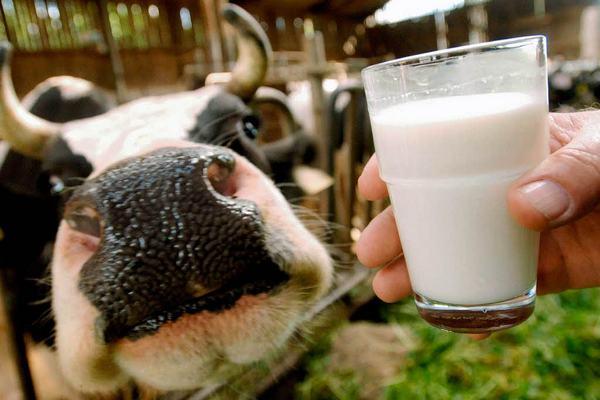 Холдинг «Агриволга» увеличит переработку молока в 8,5 раза