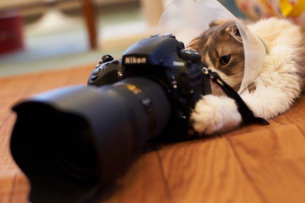 Роскачество назвало лучшие фотоаппараты для любительской съемки