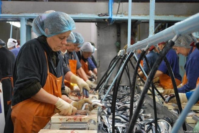 Глава «Мурманского рыбокомбината» подал на правительство в суд из-за санкций
