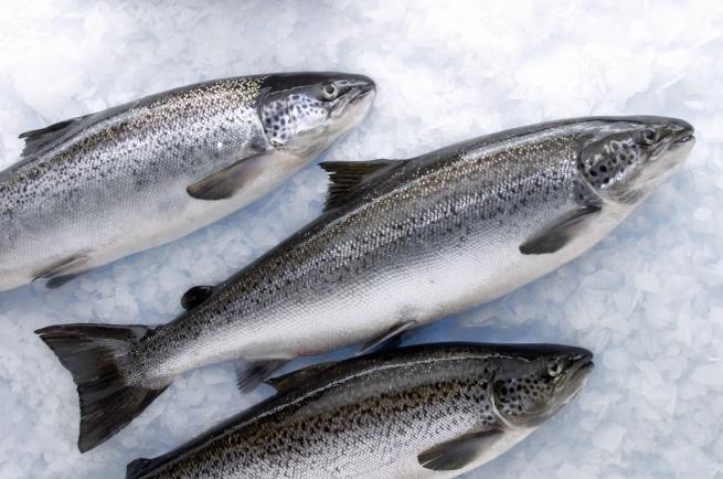 Норвегия в три раза увеличила экспорт лосося в Белоруссию