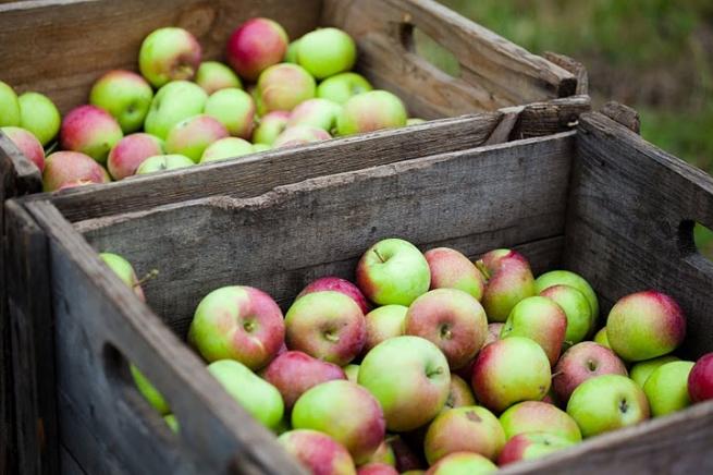 Россия может ввести запрет на ввоз яблок и винограда из Украины