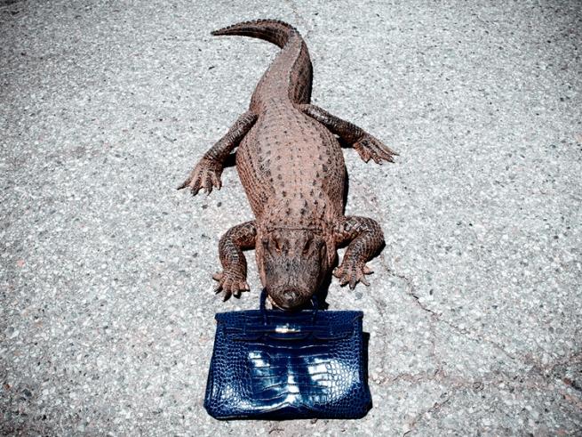 Модные дома скупают крокодиловые фермы в Австралии
