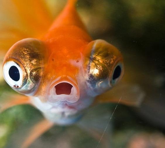 Вместо заказанного на eBay стола англичанка получила 40 разноцветных рыбок