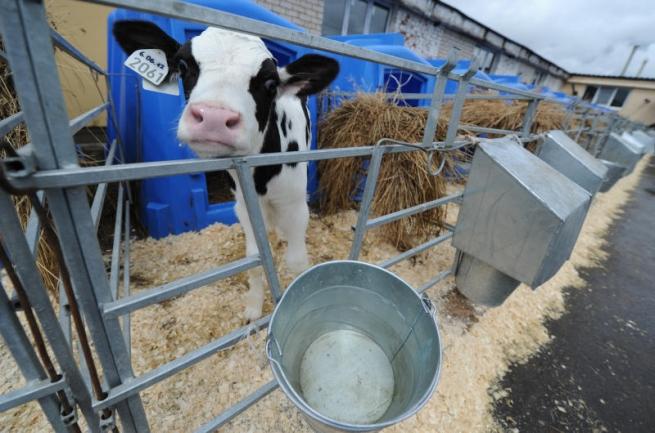 На «Русское молоко» подают в суд бывшие сотрудники