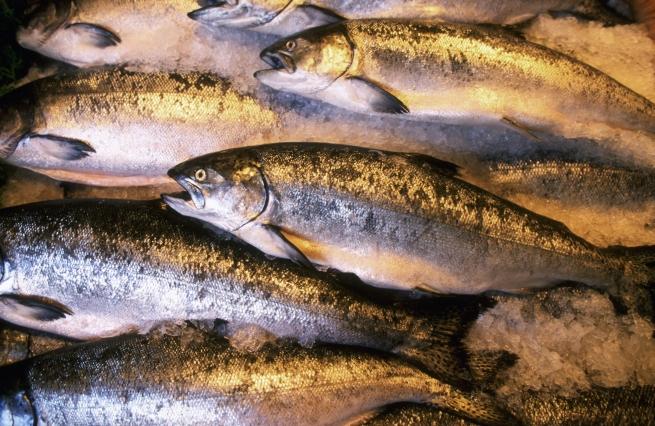 записть экономии название рыб с фото нам работу