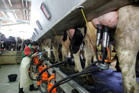 Власти Пензенской области призывают фермеров заменить доярок роботами