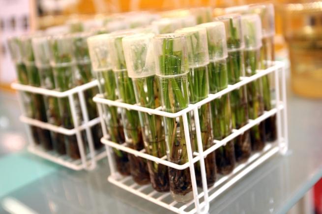 В США признали безопасными генно-модифицированные картофель и яблоки