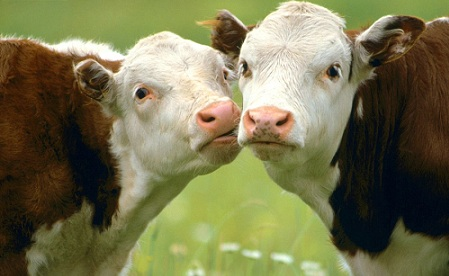 Animals Funny_Mooving in for a Kiss.jpg